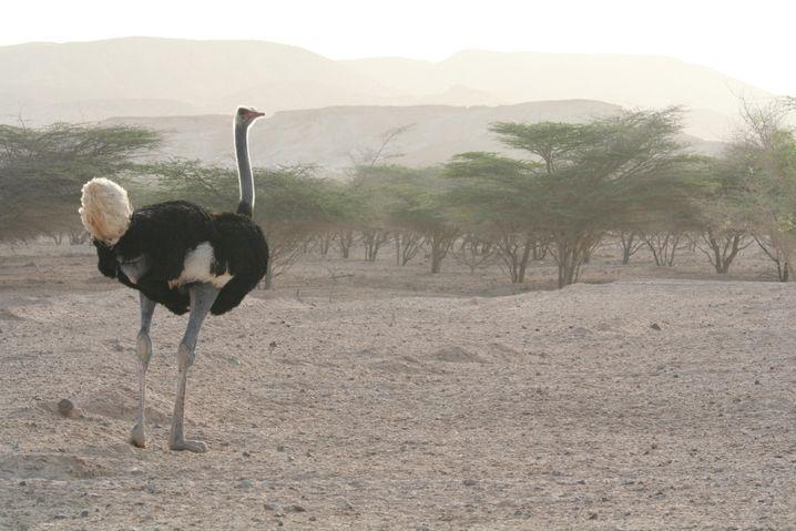 Sir Bani Yas Island in Abu Dhabi: Ein eher ungewöhnliches Tierbeobachtungsziel