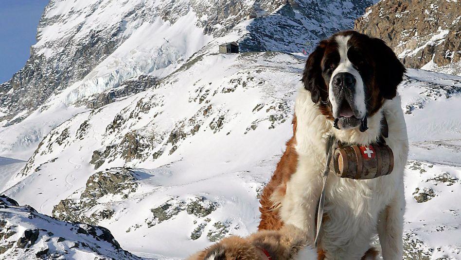 Fotoverbot: Bernhardiner vorm Matterhorn