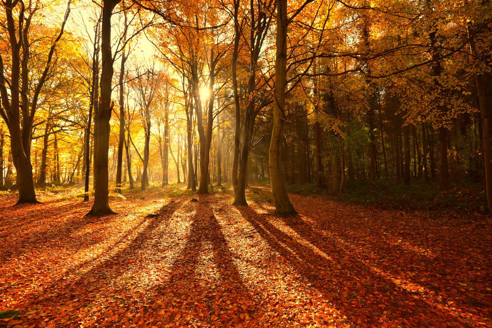Sunlight through autumn tree's with long shadows