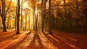 Vergangener Monat heißester November seit Beginn der Aufzeichnungen