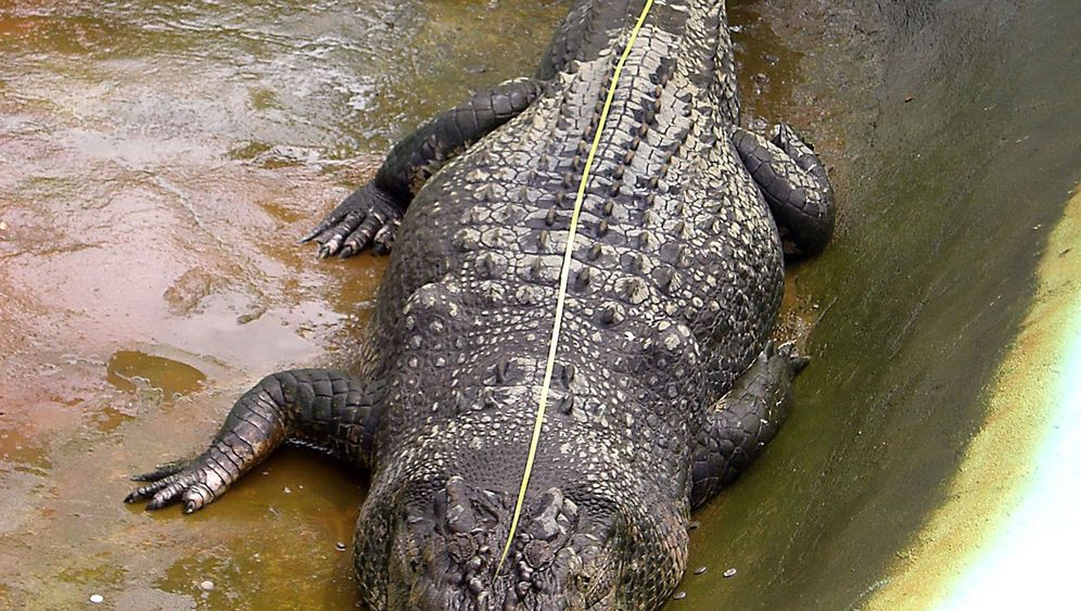 Rekord-Krokodil Lolong: Ein Reptil als Touristenattraktion