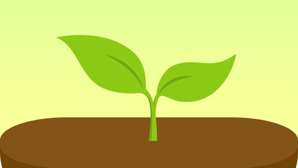 """Keim in der App """"Forest"""": Den Job vor lauter Bäumen erledigen"""