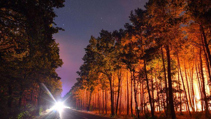 Waldbrand in Brandenburg: Kampf gegen die Flammen