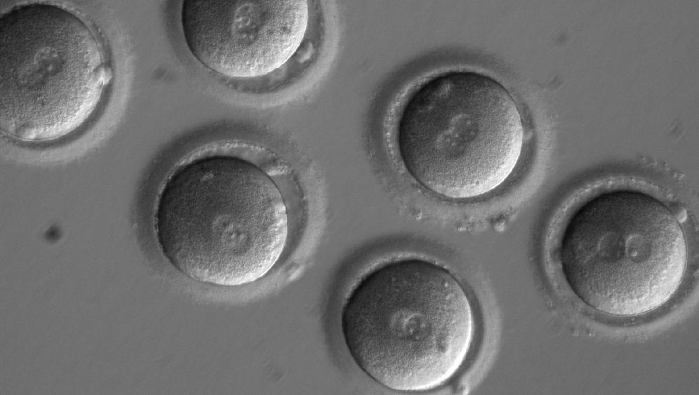 CRISPR: Eingriff in die Keimbahn
