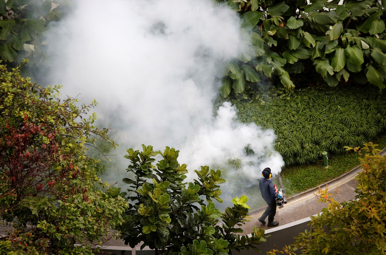 EINMALIGE VERWENDUNG Zika/ Gas/ Garten/ Singapur