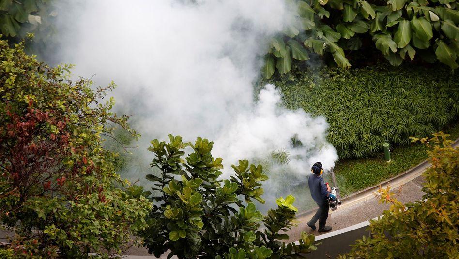 Mückenbekämpfung in Singapur: Auch in dem Stadtstaat breitet sich das Virus aus