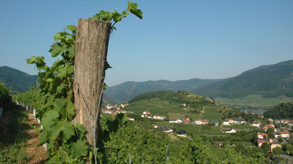 Weinstraßen Europas: Die schönsten Routen zu den Reben
