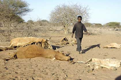 A boy walks by cattle carcasses in northern Kenya.