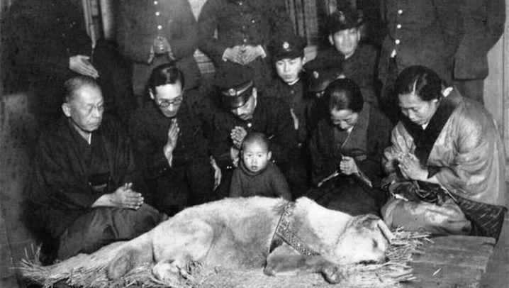 Tierberühmtheit Hachiko: Ein Legende unter den Hunden