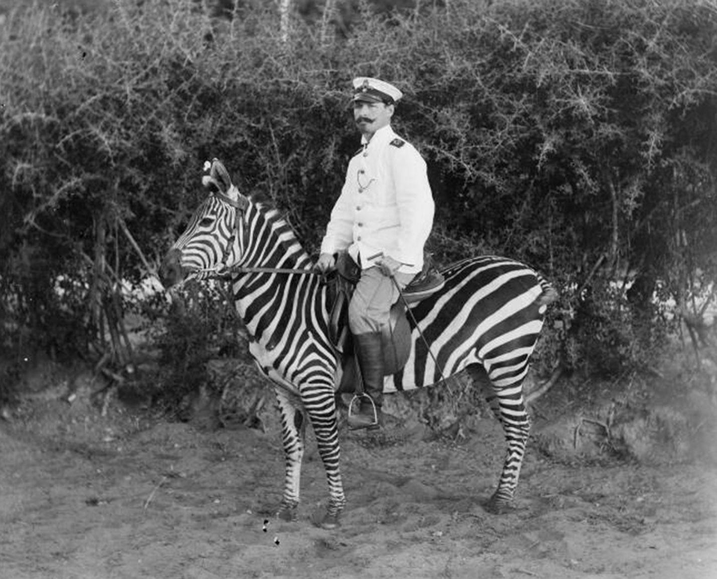 Reiter auf gezähmten Zebra