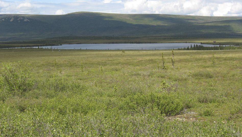 Tundraartige Vegetation: So wie hier am Eight Mile Lake, Alaska sah es auch vor 20.000 Jahren auf der Beringia aus