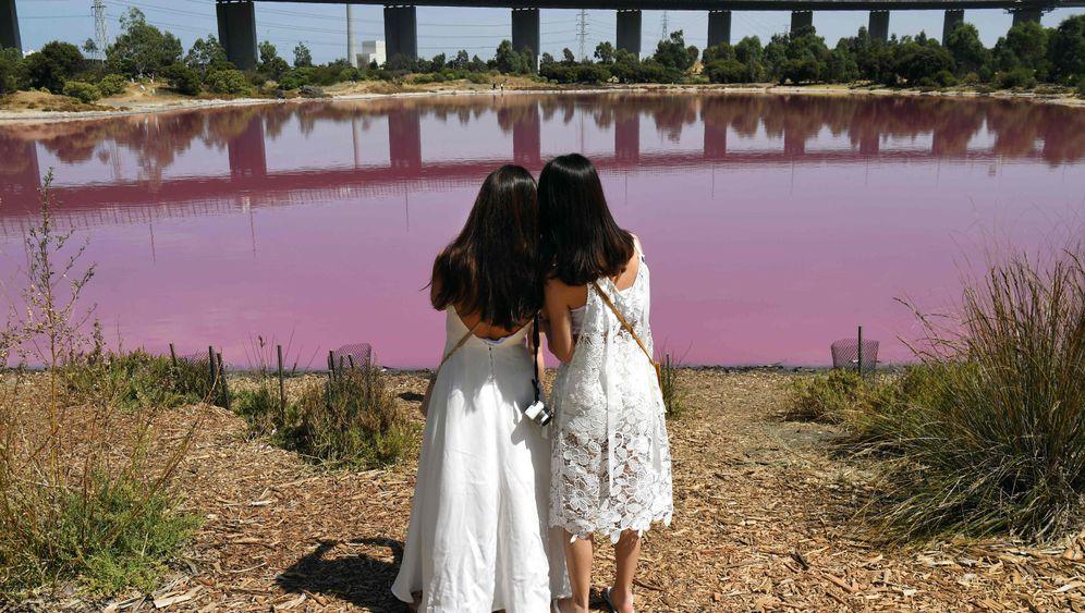 Rosa See in Melbourne: Pink, Pinker, Westgate-Park
