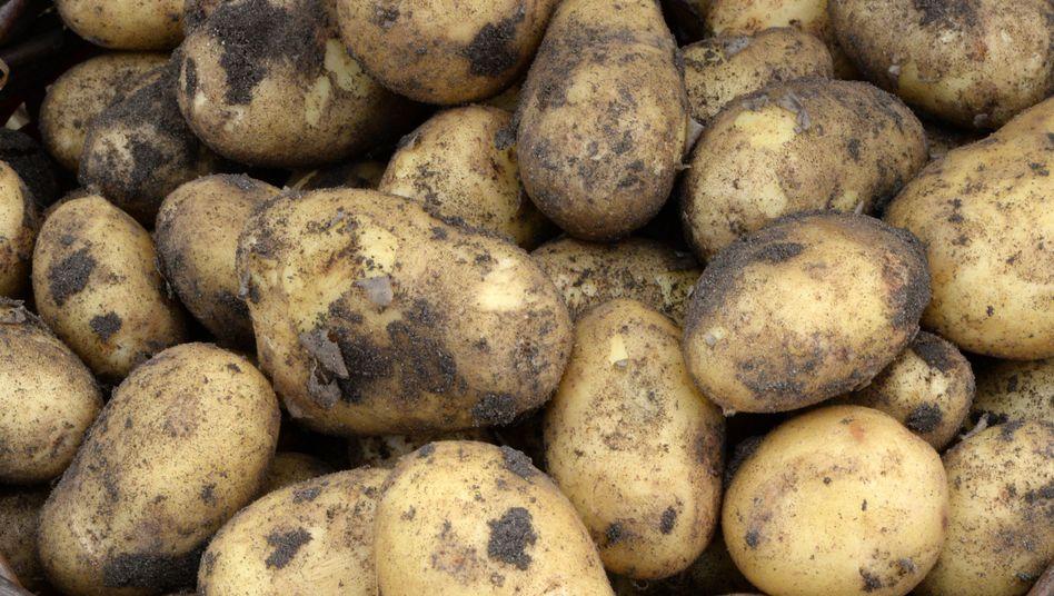 Frisch geerntete Kartoffeln: Verbraucher müssen sich auf Preisanstieg einstellen