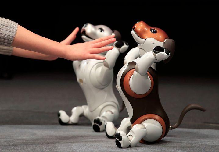 Aibo-Roboterhunde