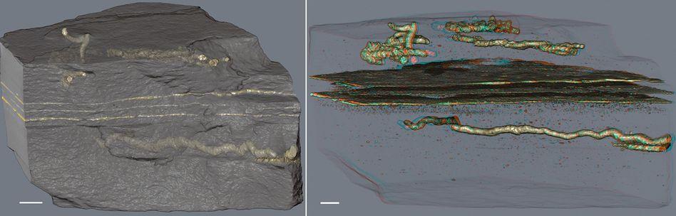 Strukturen in 2,1 Milliarden Jahre altem Gestein