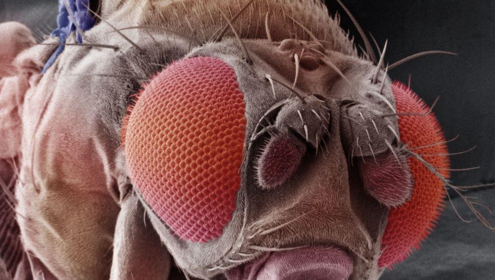 Insektenforschung: Das ist ja zum Fürchten!