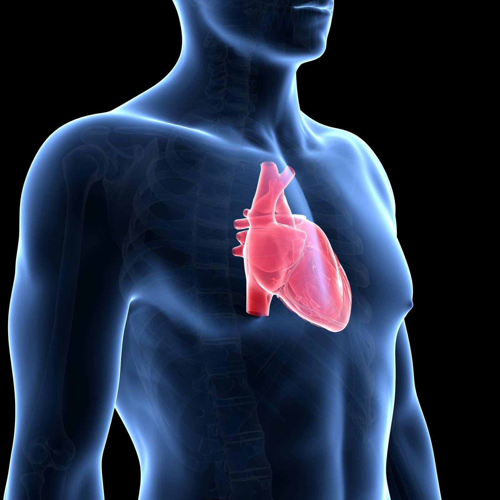 EINMALIGE VERWENDUNG Herz