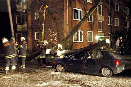 Sturmschaden: Autos durch umstürzende Bäume getroffen?