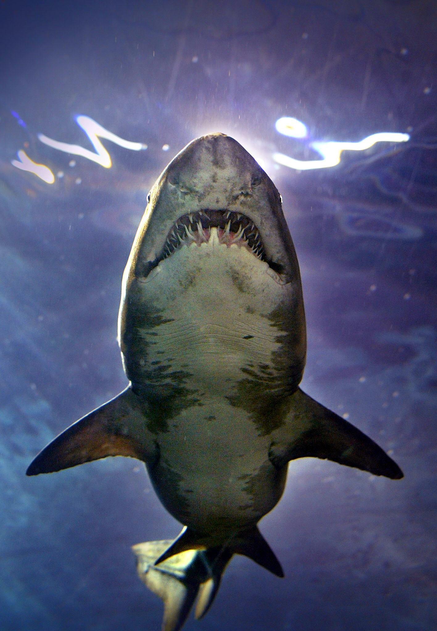 SPAIN-SHARK-AQUARIUM