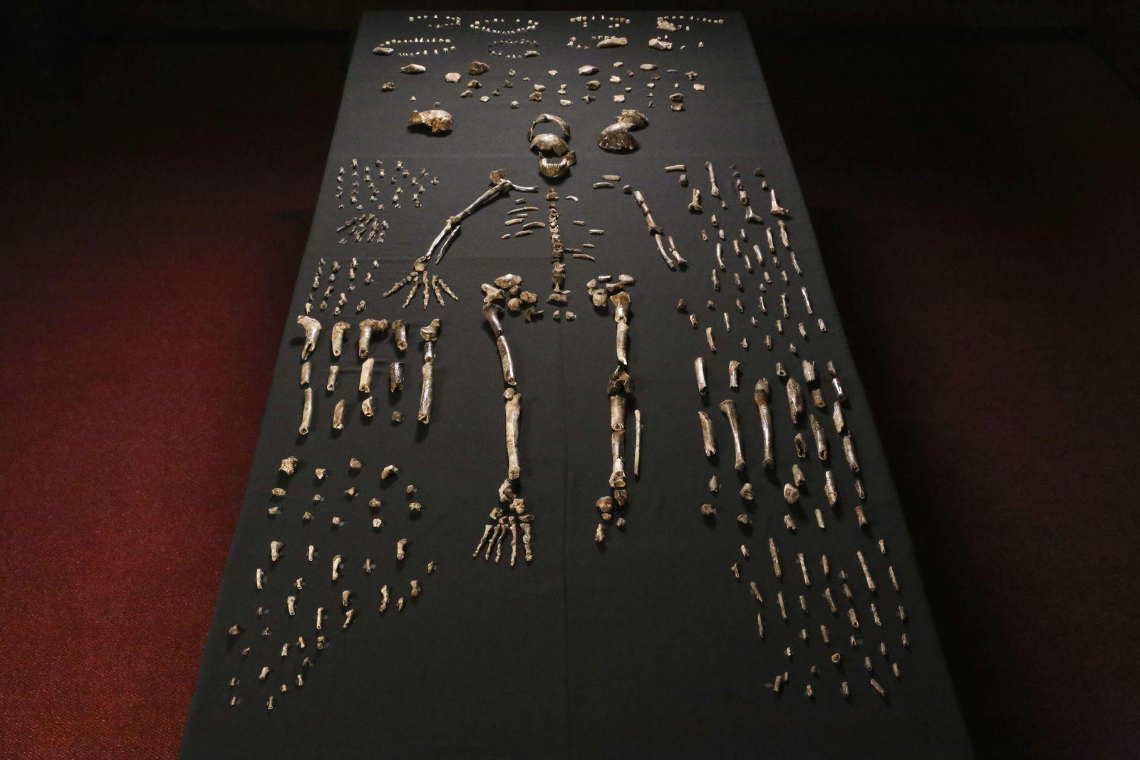 EINMALIGE VERWENDUNG Homo naledi