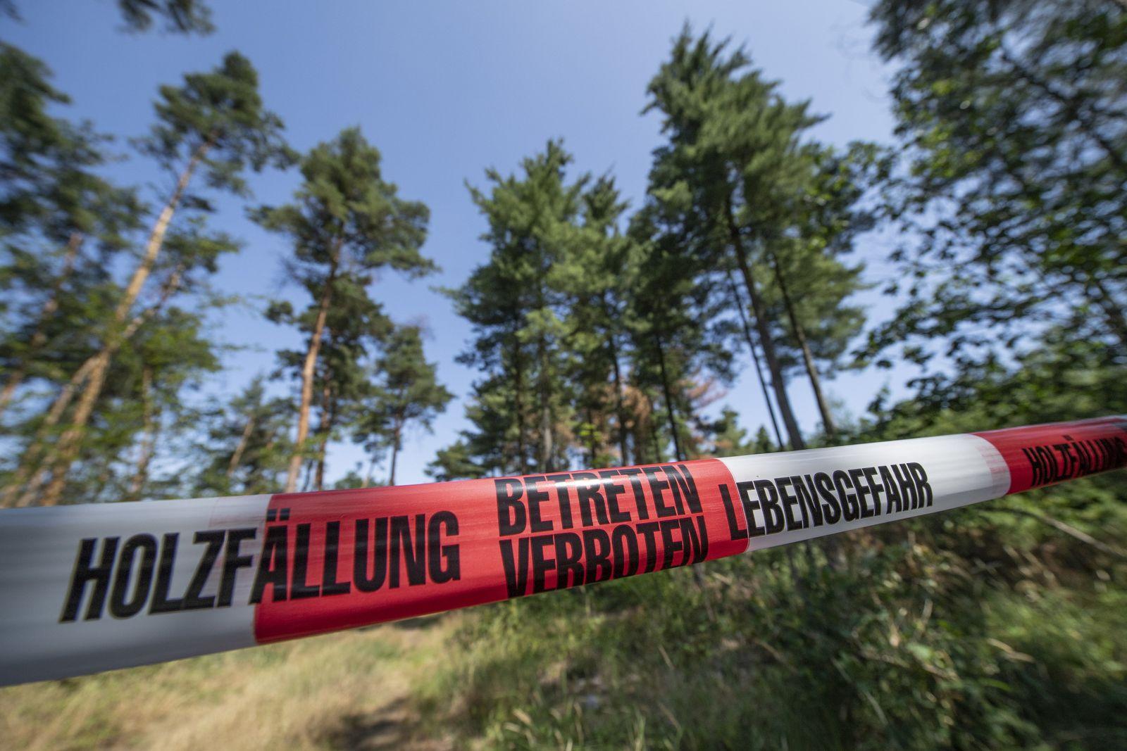 Klimaschäden im Wald
