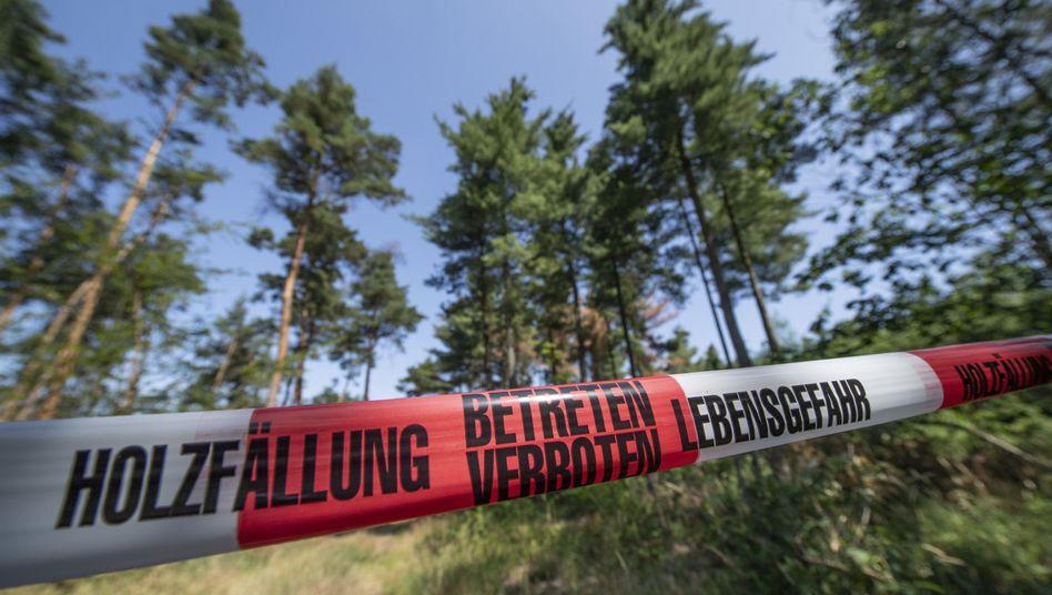 Wald in Hessen: Eine Absperrung begrenzt ein Areal, in dem abgestorbene oder kranke Bäume gefällt werden müssen