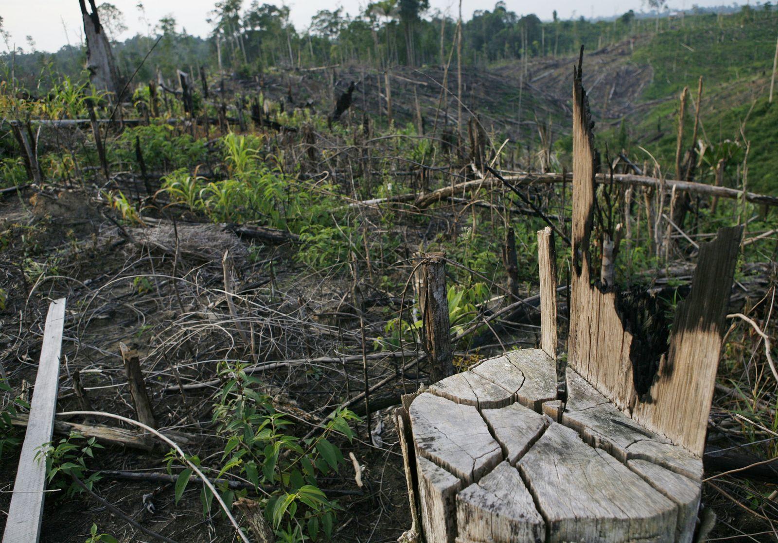 Indonesien Entwaldung