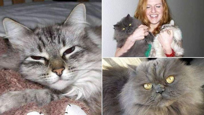 Katzen-Technik: Die bloggende Katzenklappe