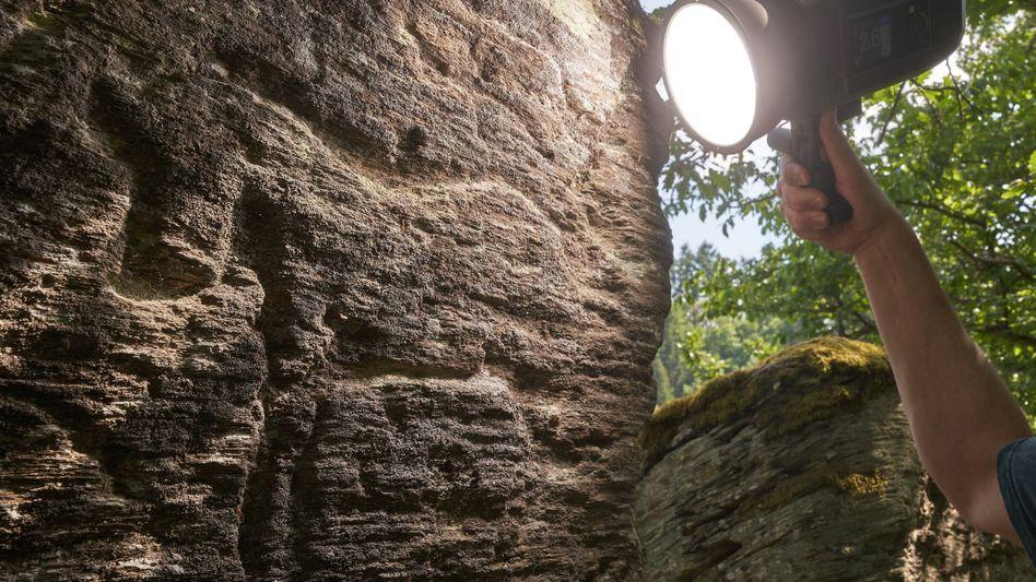 Felskunst auf einem Schieferfelsen im Hunsrück: Drei Pferde und ein unbestimmtes Tier