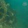 """Unterwasserarchäologen untersuchen """"HMS Terror"""""""