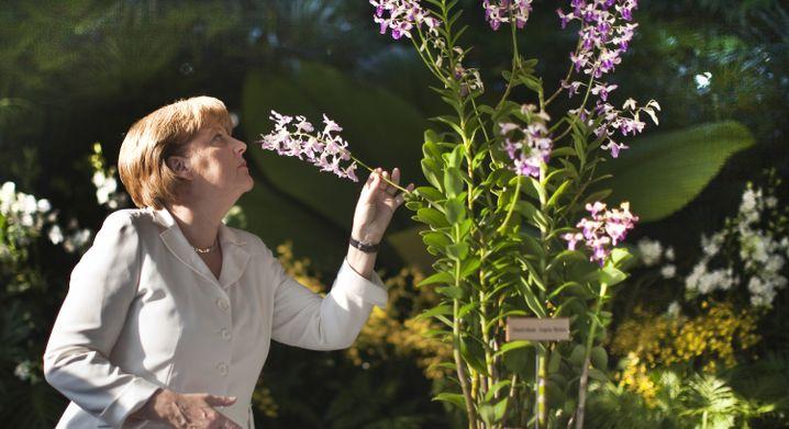 Merkel (CDU) riecht in Singapur an der Orchidee