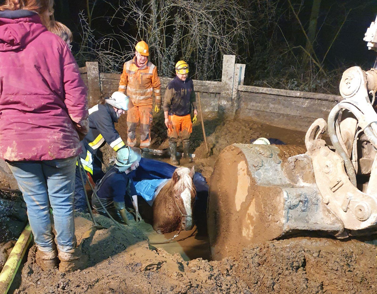 Hilfloses Pferd aus Schlammgrube befreit