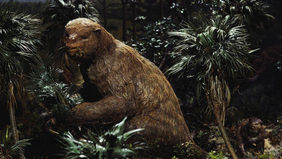 Riesenfaultier (Symbolbild): Vor 10.000 Jahren verschwunden