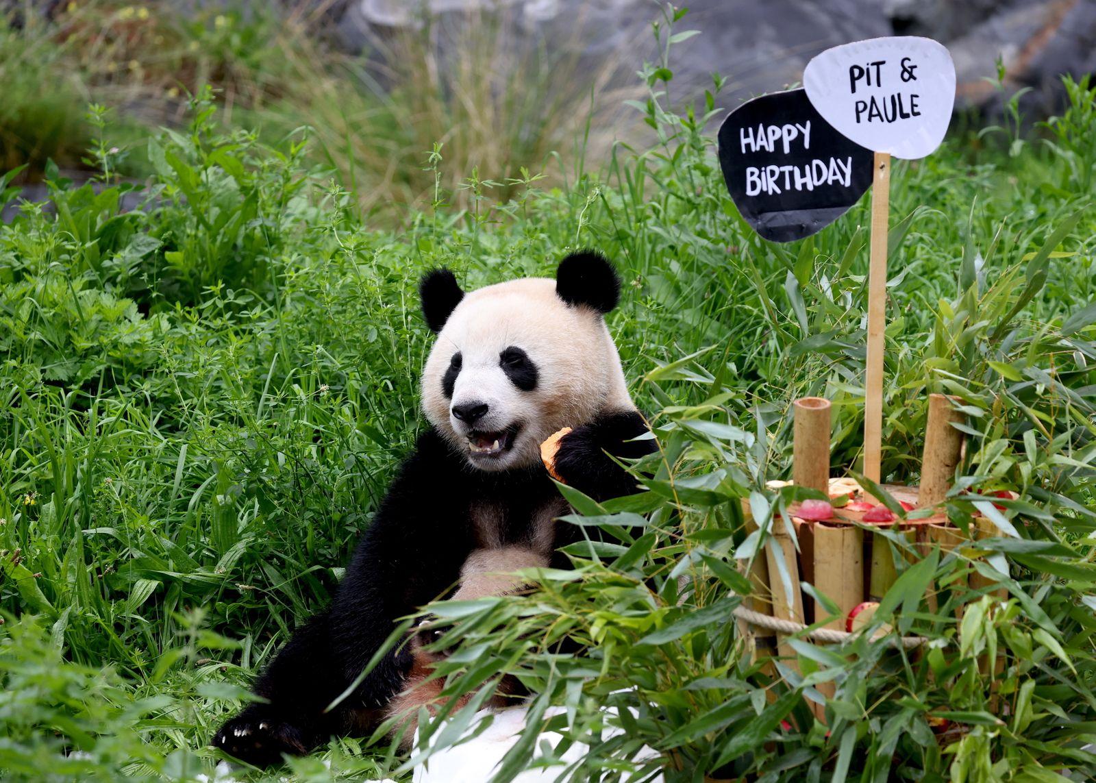 Baby pandas of Zoo Berlin celebrate their second birthday