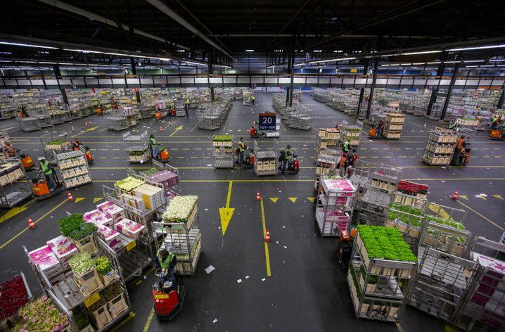 Lagerhaus in Aalsmeer (Archivbild): Branche droht Milliardenverlust