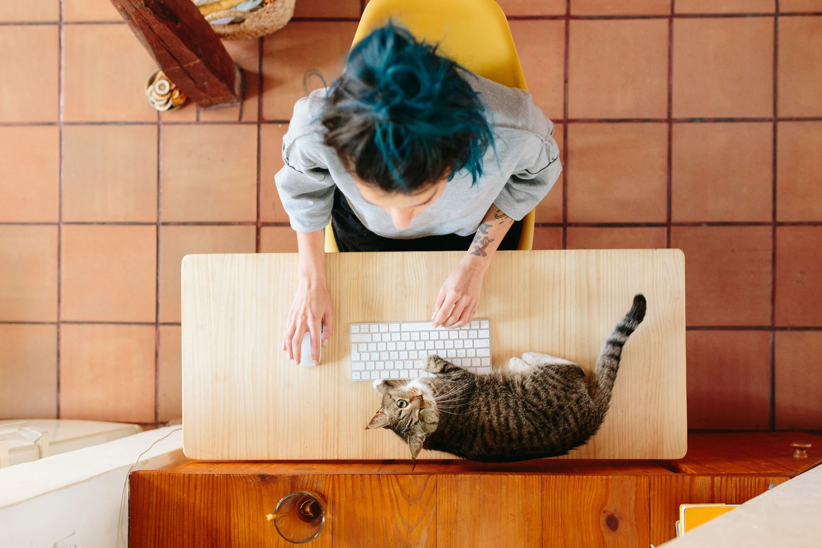 Working With My Cat!
