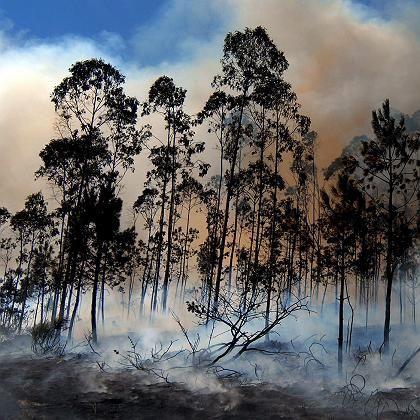 Waldbrand im spanischen Muxia: Dürre wird in manchen Regionen zur Regel werden