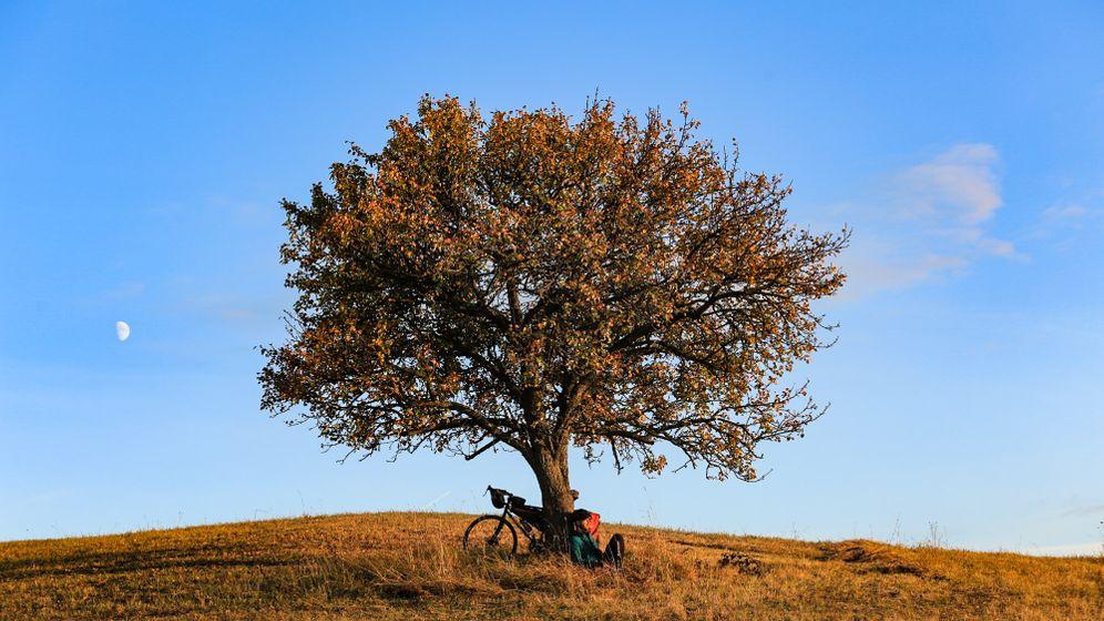 Rast unter einem Baum in Transsilvanien