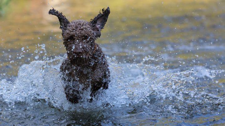 Tierfotografie: Noch mehr Hundefotos