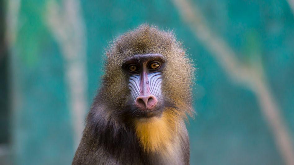 Affe im Duisburger Zoo: Flickr zeigt die Lieblinge der Tierparkbesucher