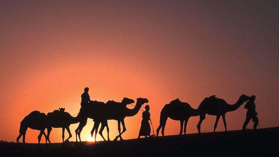Kamelkarawane in der omanischen Wüste