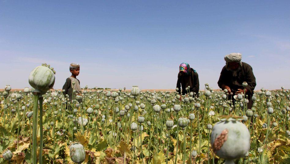 Mohnanbau in Afghanistan
