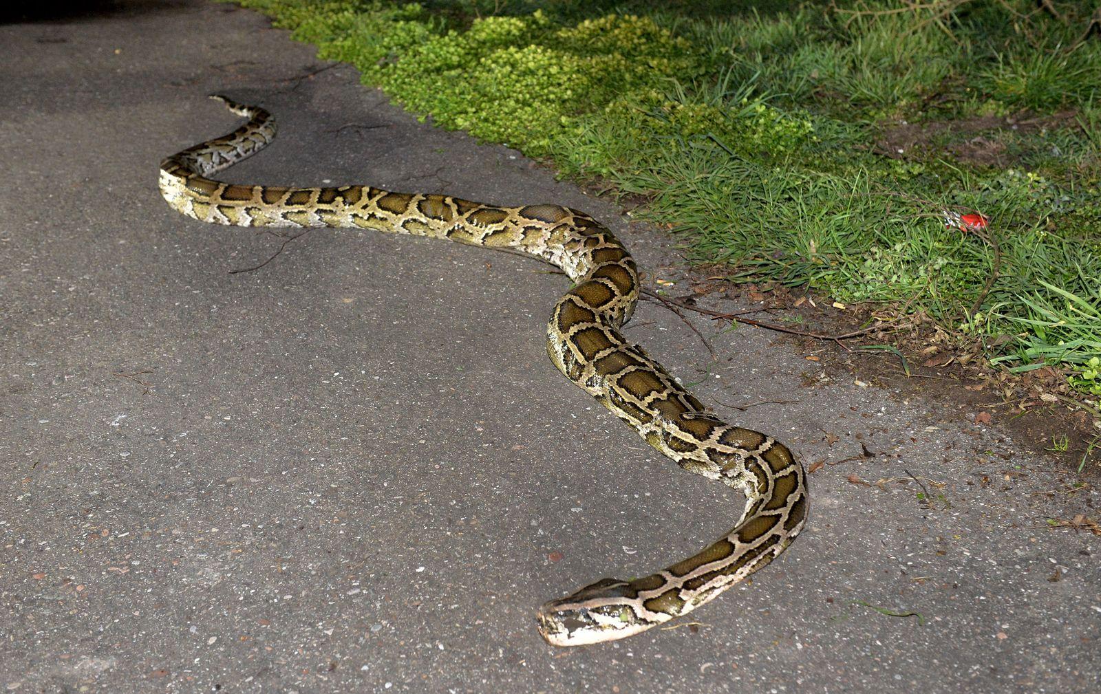 Vier Meter lange Schlange auf Rastplatz gefunden