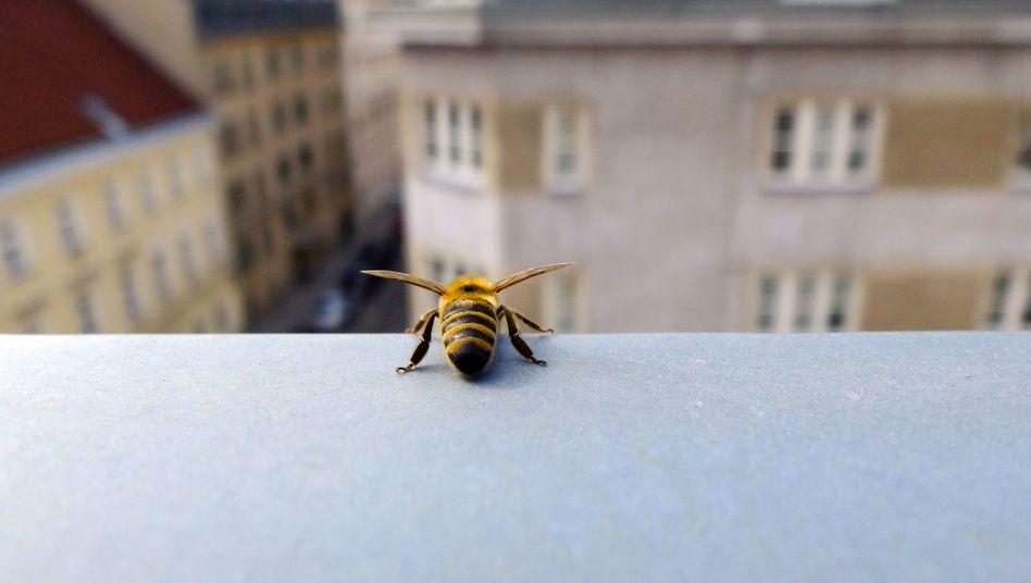 In manchen Habitaten hat die Zahl der Insekten in den letzten zehn Jahren um 67 Prozent abgenommen