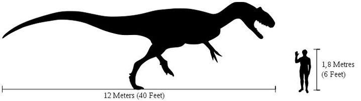 Größenvergleich Allosaurus/Mensch