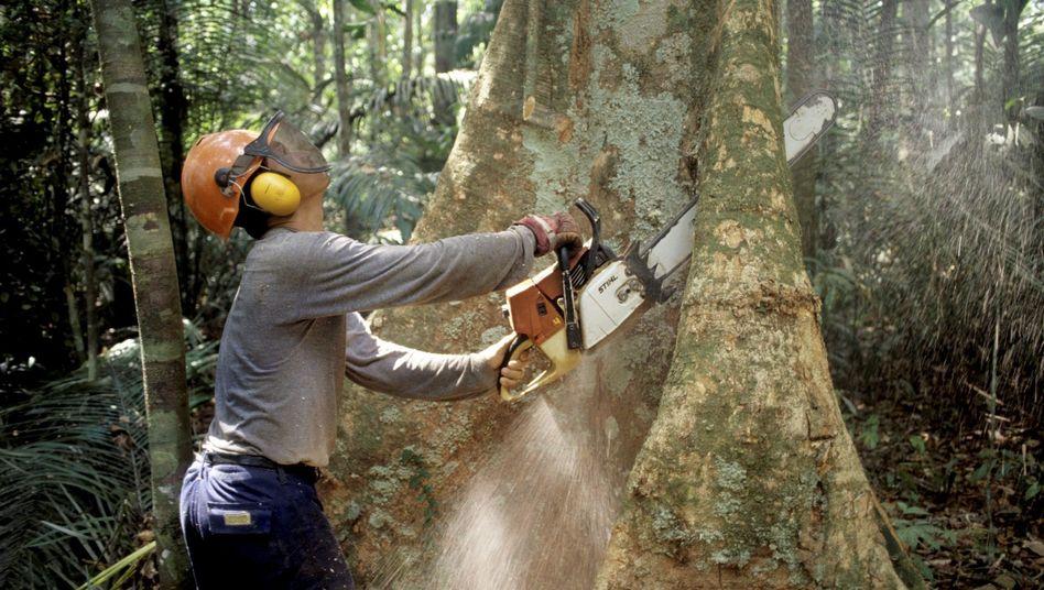 Ein Holzfäller im brasilianischen Regenwald