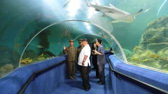 Leben in Nordkorea? Ein einziger Spaß