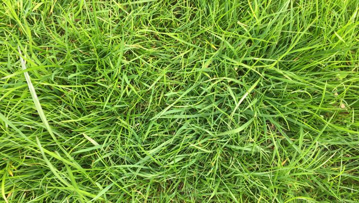 Rasenpflege: Fast Fifty Shades of Green