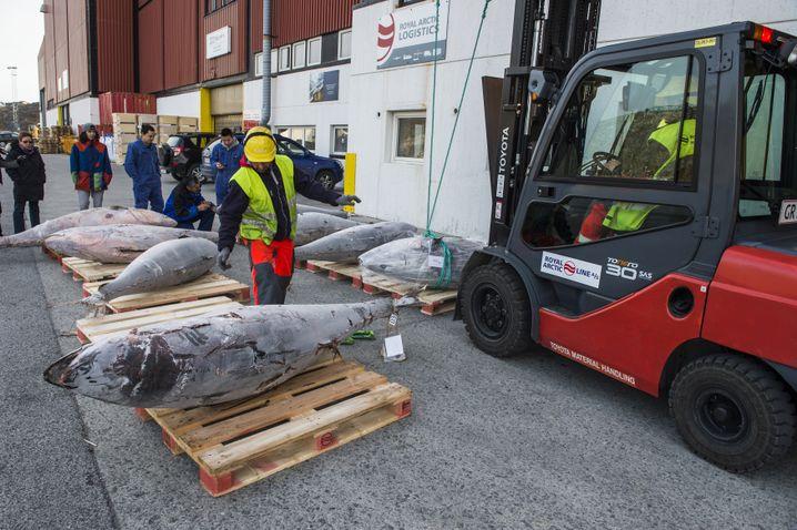 Fische im Hafen von Nuuk: Wirtschaftlich von Dänemark abhängig