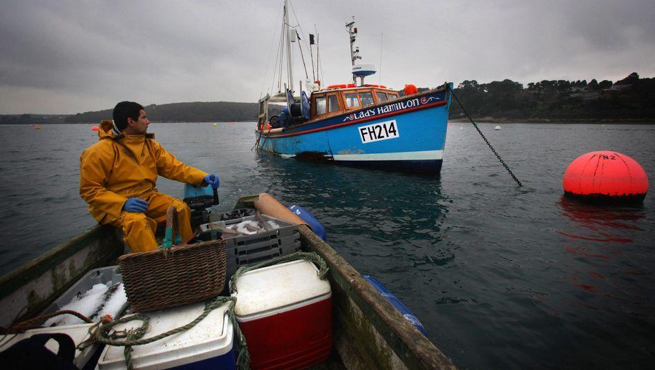 Fischer in Cornwall (England): Dramatische Abnahme der Fischbestände
